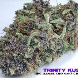 TRINITY-KUSH---1